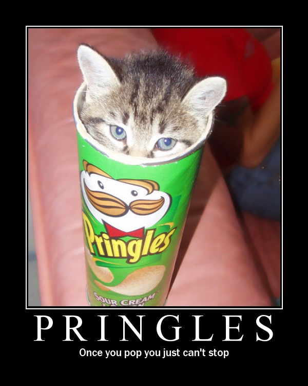 Can A Cat Eat Chips