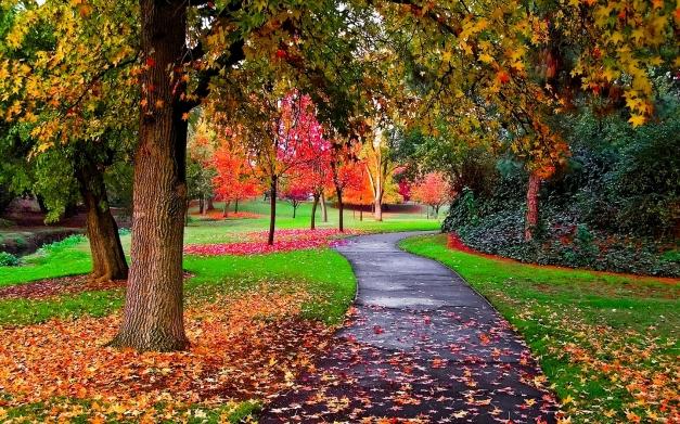Autumn-in-the-Park-autumn-25517310-1440-900