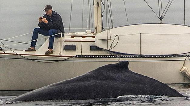whale and cell phone